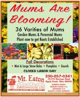 mums-are-blooming-8-24-16c